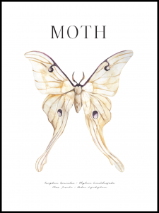 Poster moth