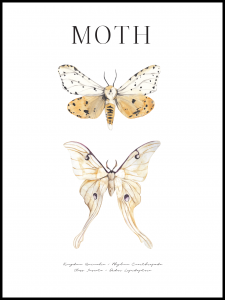 Poster moth-2