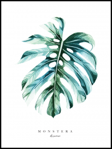Plakat monstera drawing