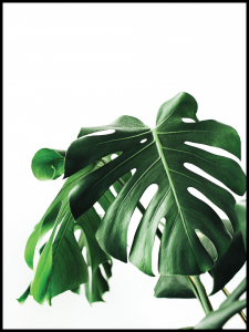 Plakat monstera friends