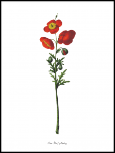 Plakat wild flowers -red