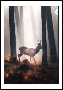 Poster autumn deer