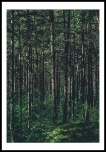 Poster magic forest