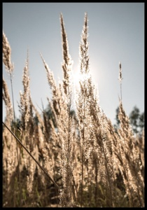 Plakat long grass 4