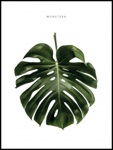 Plakat monstera power