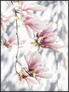 Plakat magnolia morning
