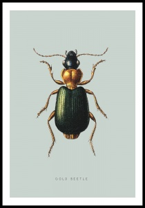 Plakat gold beetle