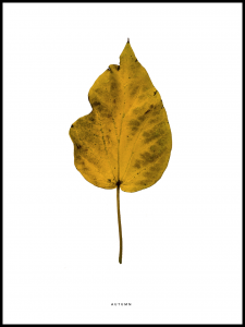 Plakat autumn leaf